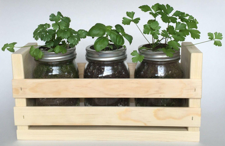 Amazon Com Herb Garden Trio Great For Growing An 640 x 480