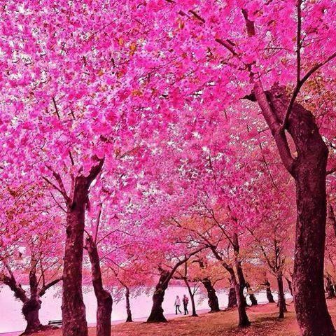 Sao On Twitter Good Night World Beautiful Nature Landscape Photography