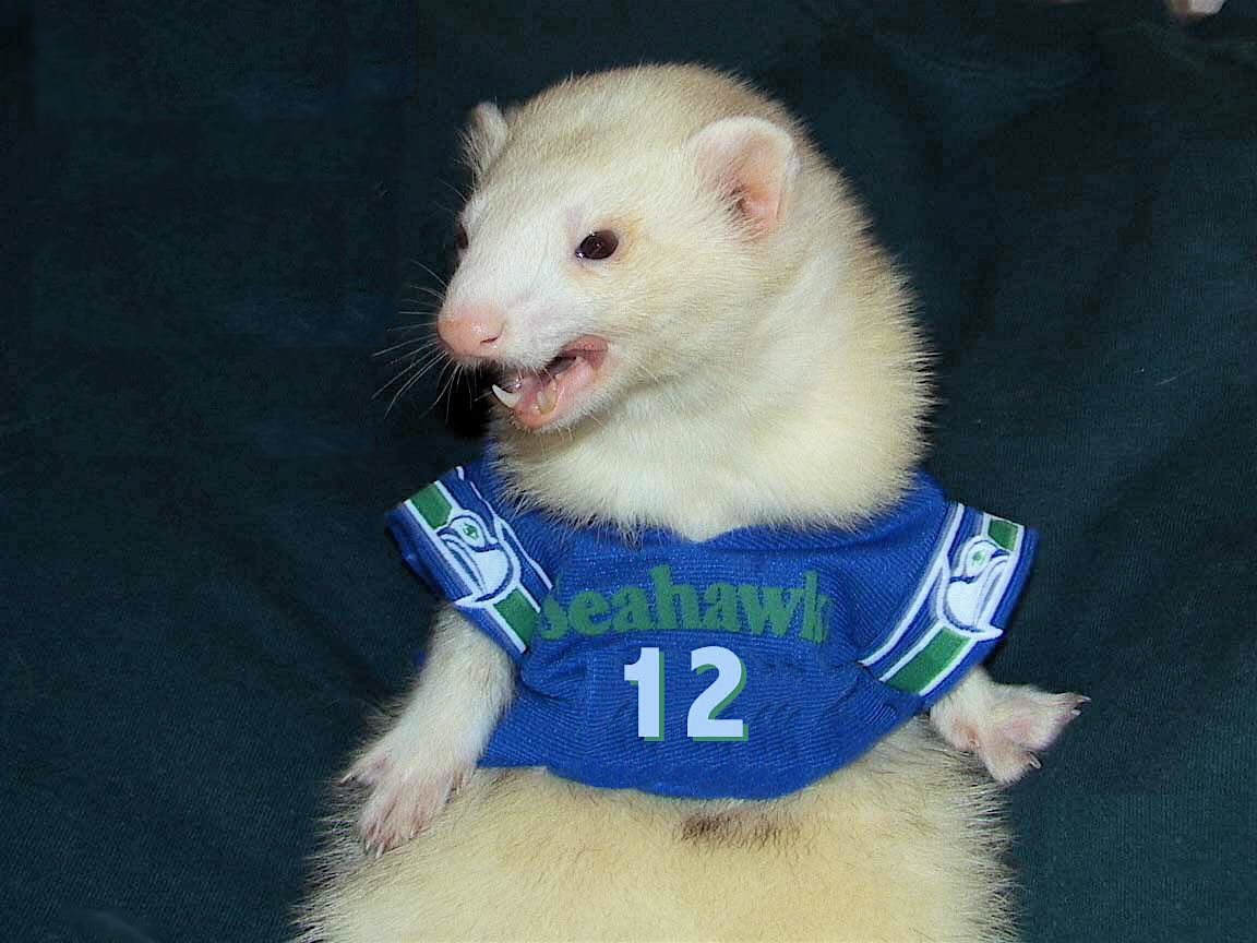Pin By Jacki Chase On Ferret Lover In 2020 Cute Ferrets Animals Fierce Animals