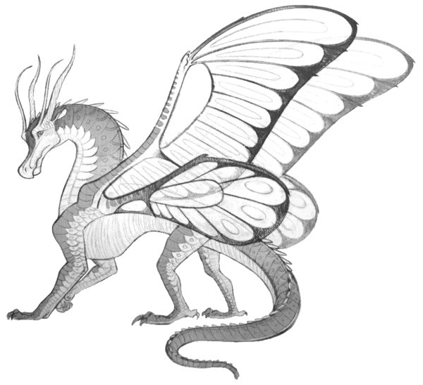 Joy Ang S Drawing Of A Silkwing This Pic After A Few Edits I M Sure Will Go On The Guide At The Beginning Wings Of Fire Dragons Fire Drawing Wings Of Fire