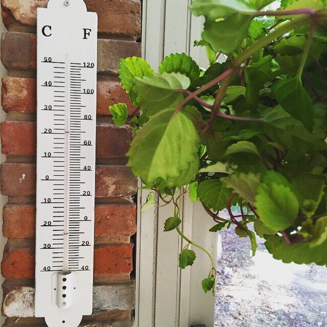 August is officially here, so while you probably don't need to be told it's warm outside, you should monitor the heat for the sake of your plants, herbs or garden. Our Vintage Thermometers are great for watching the temperature in your greenhouse, sunroom or on your porch, while adding an authentic feel to your space. Shop link in profile!