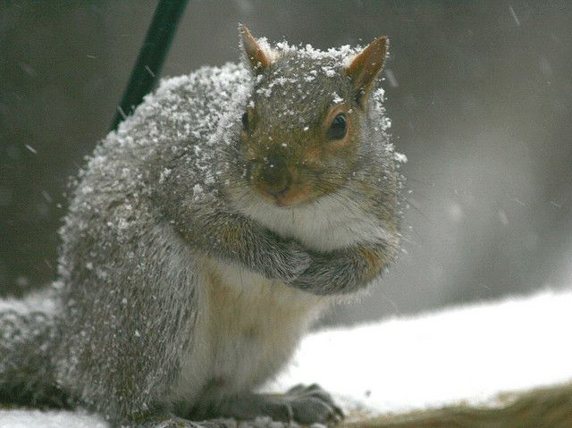 Staying warm as the snow flies | Endless Wildlife