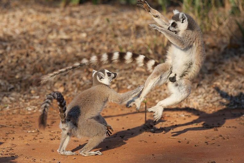 Young males fighting.
