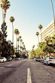 Image result for california palm tree wallpaper for iphone
