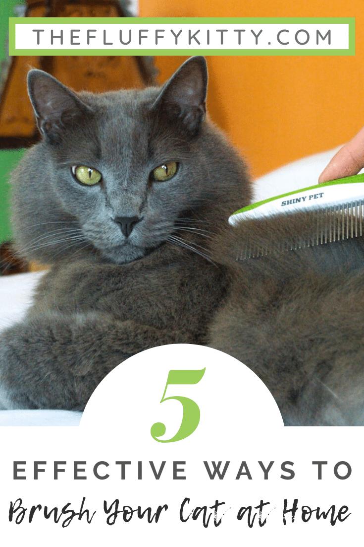 What S The Best Pet Comb For Cats Ft Shiny Pet Comb En 2020