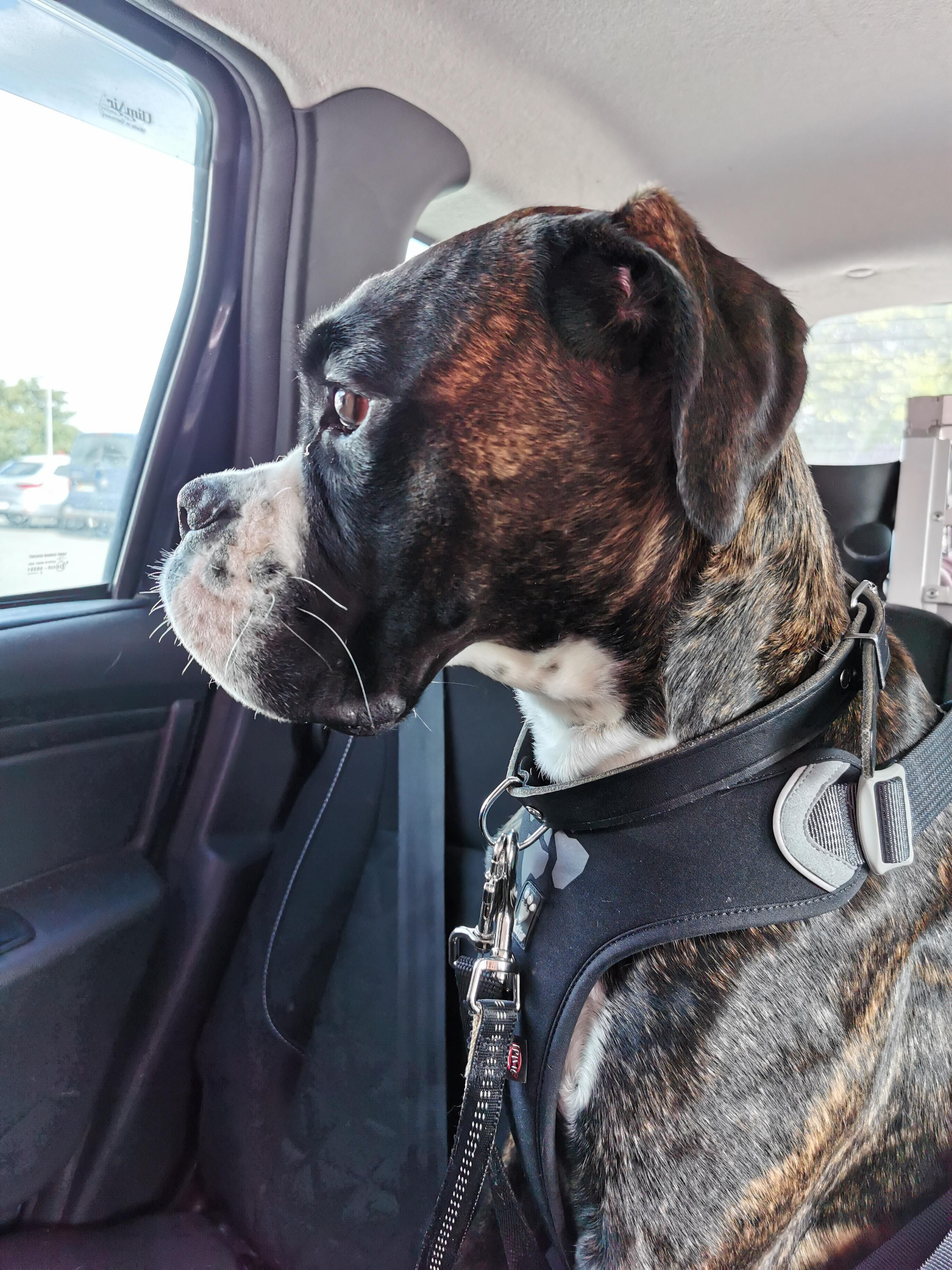 Best Food For Boxer Dogs Australia References