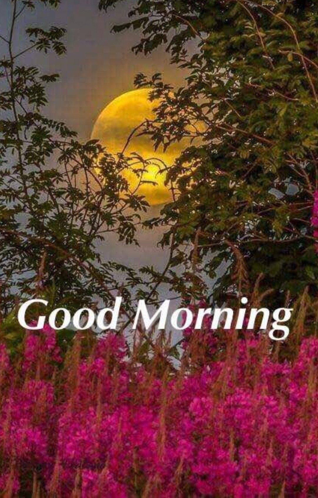 Pin By Nitin Bharti On Morning Greetings Quotes Pinterest