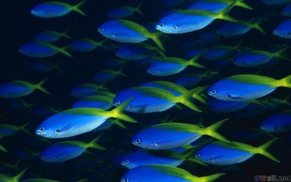 Beautiful Blue Fish