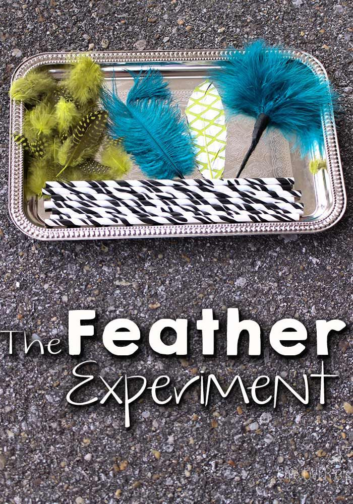The Feather Experiment Learning About Wind Science