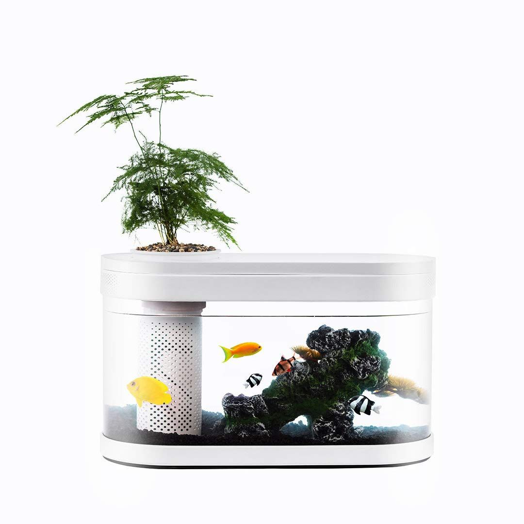Geometry Fish Tank Aquaponics Ecosystem Small Water Garden Home Decor In 2020 Small Water Gardens Fish Tank Aquaponics Aquaponics Ecosystem