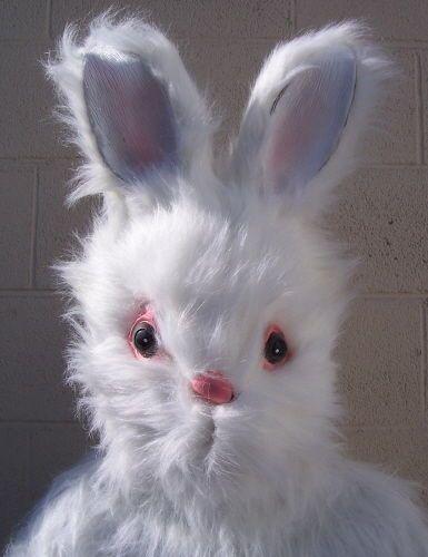 Easter Bunny Suit Halloween Costume Adult Mascot Rabbit   eBay