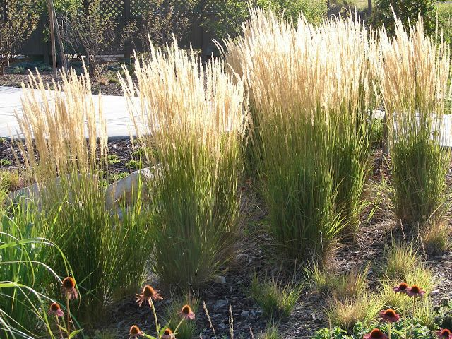 New utah gardener the most drought tolerant waterwise for Tall grass garden