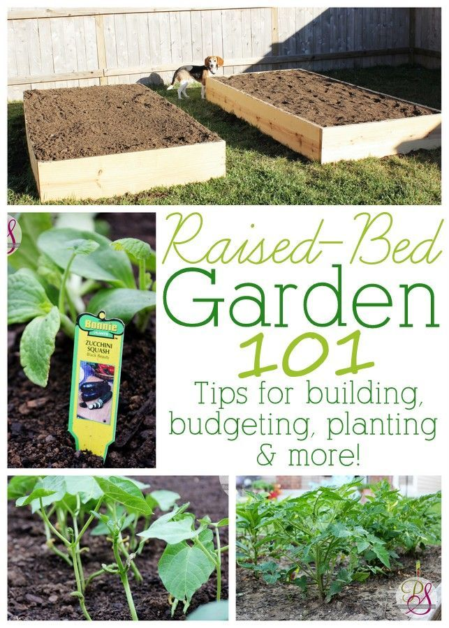 information for anyone wanting to try out raised-bed gardening. Tips for building, budgeting, planting and more!Great information for anyone wanting to try out raised-bed gardening. Tips for building, budgeting, planting and more!