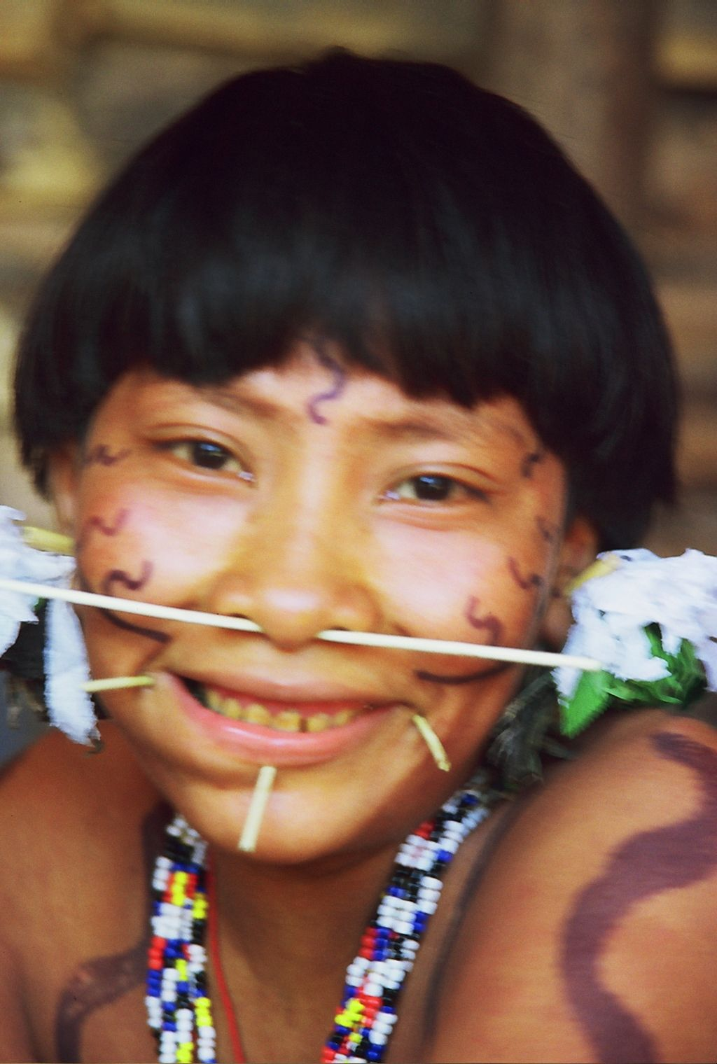 Yanomami Woman With Ear Ornaments And Wad Of Tobacco In Her Cheek Alto Orinoco Amazonas Venezuela