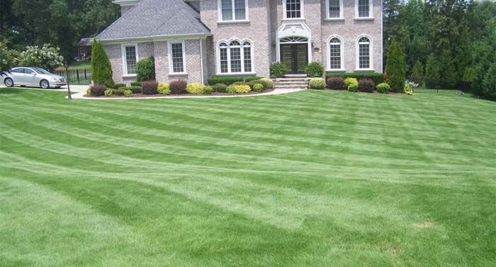 Drought Tolerant Bermuda Grass From Park Avenue Turf Bermuda Grass Drought Tolerant Grass