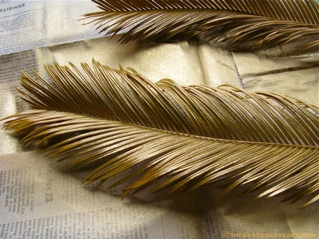 Sago Palm Leaves The Gardener's Eden