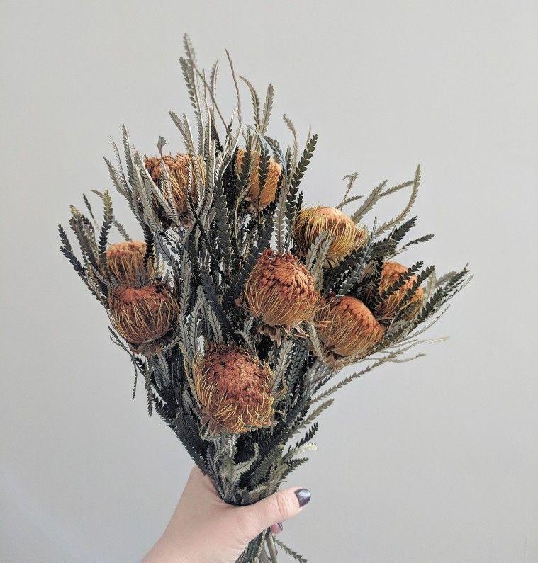 Banksia Dryandra How To Preserve Flowers Australian Native Flowers Unusual Flowers