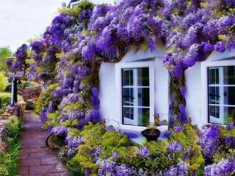 Sociadad, Argentina de Horticultura