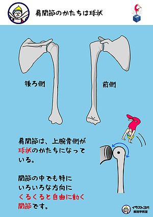 イラストヨガ解剖学