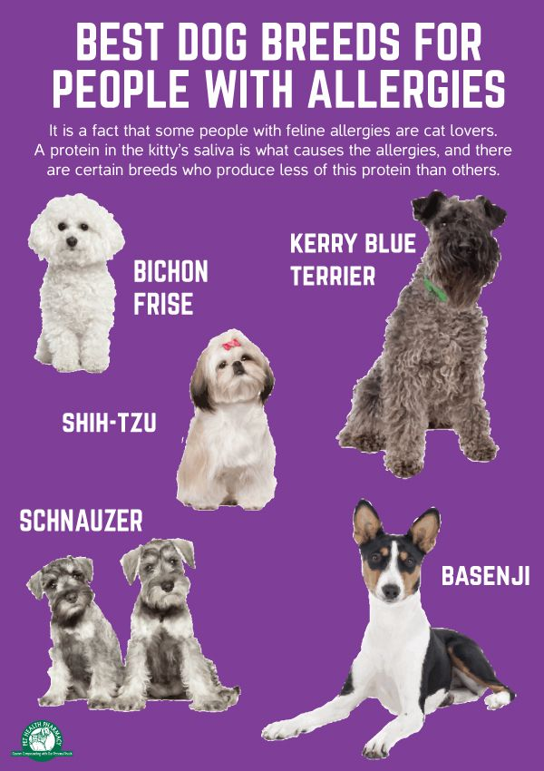 Best Dog Breeds For People With Allergies Dogs Allergies Lowallergen Hypoallergenic Best Dog Breeds Dogs Dog Breeds