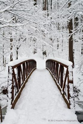Photography  : snow : Mother Nature