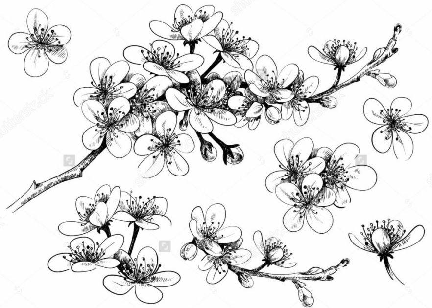 Gambar Bunga Pakai Pensil 15 Gambar Sketsa Bunga Dari Pensil Yang Mudah Dibuat Download 9 Cara Untuk Menggamba Sketsa Bunga Tato Bunga Sakura Gambar Bunga