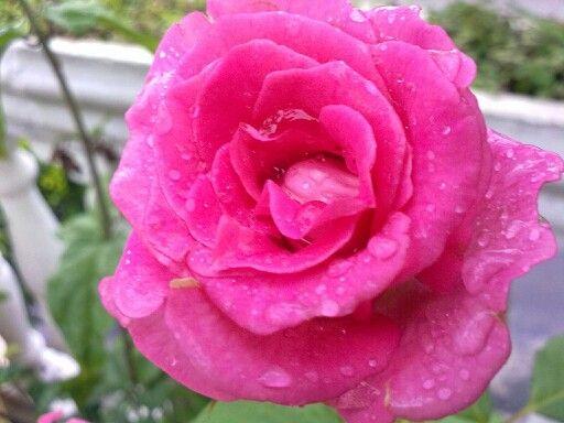Flores do meu jardim!!!
