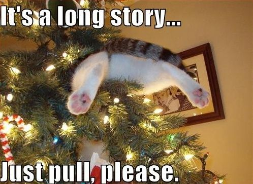 Funny Cat Pictures : It's A Long Story