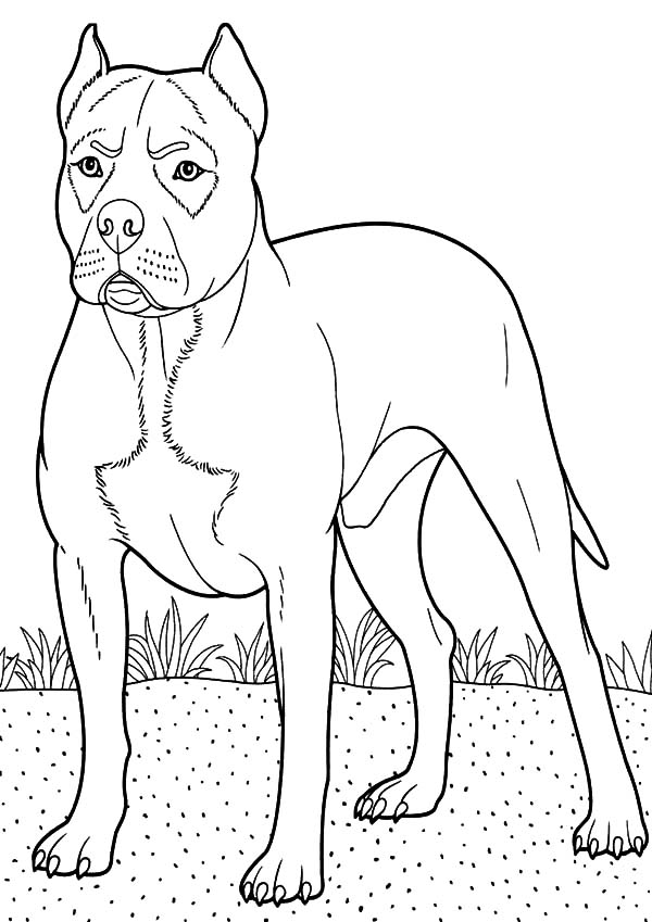 Boxer Dog Guarding At Backyard Coloring Pages Best Place To Color Coloring Pages Dog Coloring Page Boxer Dogs