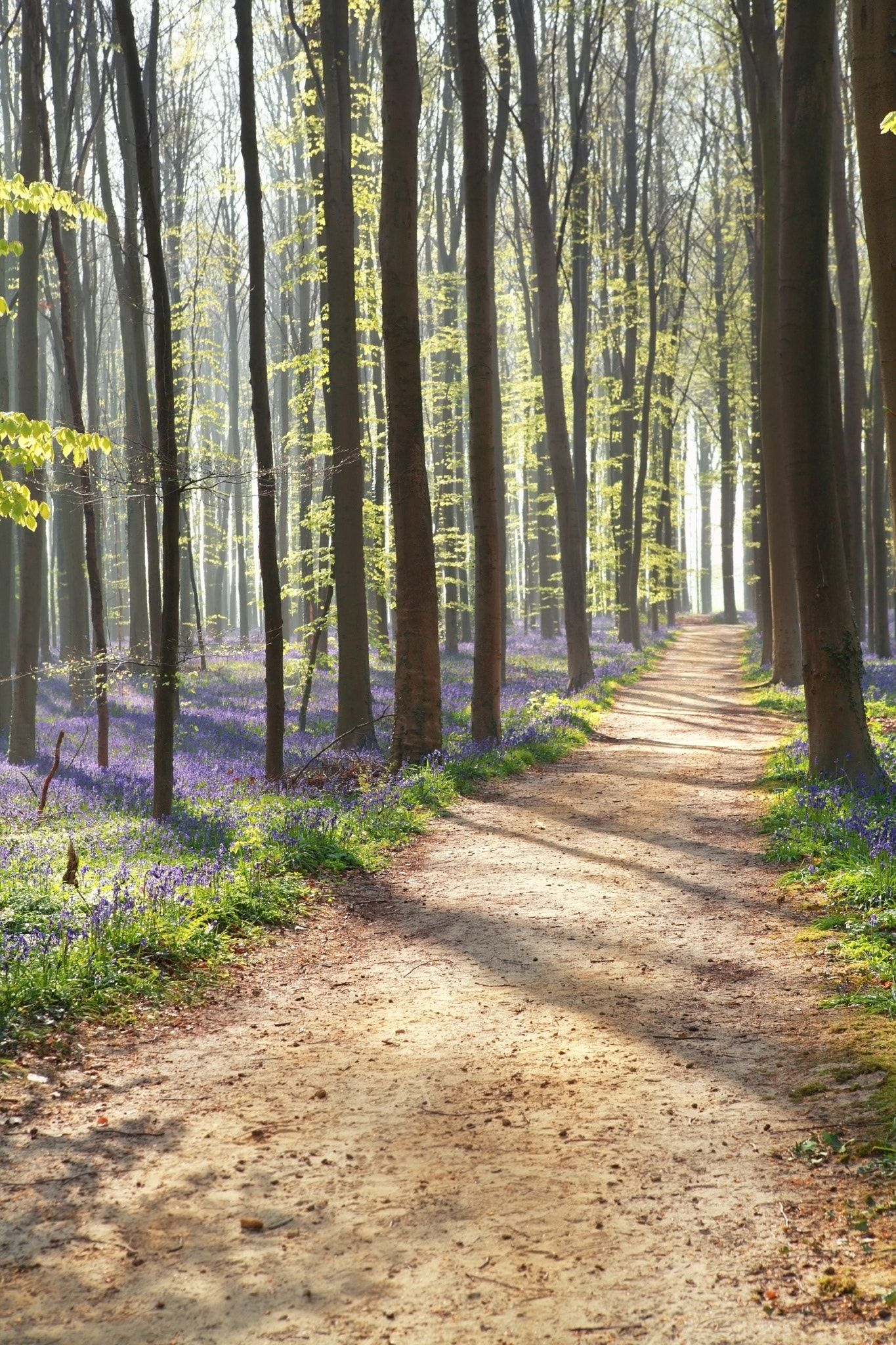 Walk Path In Sunny Forest With Flowers Beautiful Nature