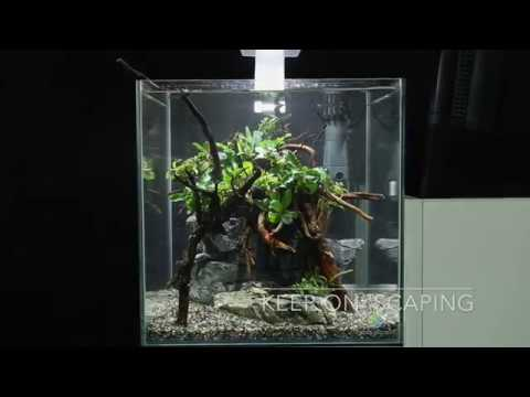 How to set up a simple yet beautiful aquascape in one ...