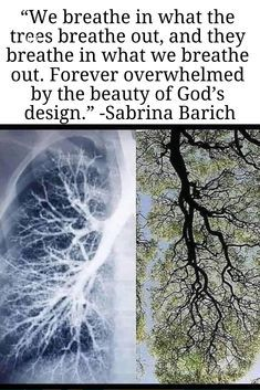 We breathe in what the trees breathe out and they breathe in what we breathe out Forever overwhelmed by the beauty of Gods design Sabrina Barich Amazing creation
