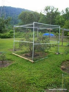 Pvc Pipe And Special Netting To Keep Birds From Eating