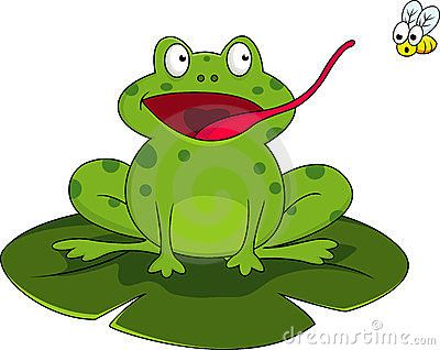 Frog Stock Photos 21477 Images Photography Pictures