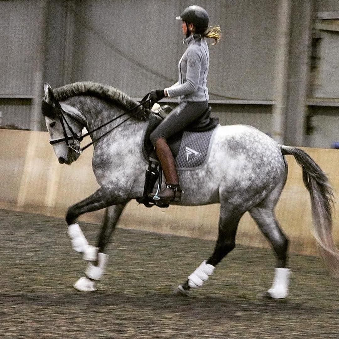Pin By Jadyn Phillips On Horses Pferde Dressurreiten