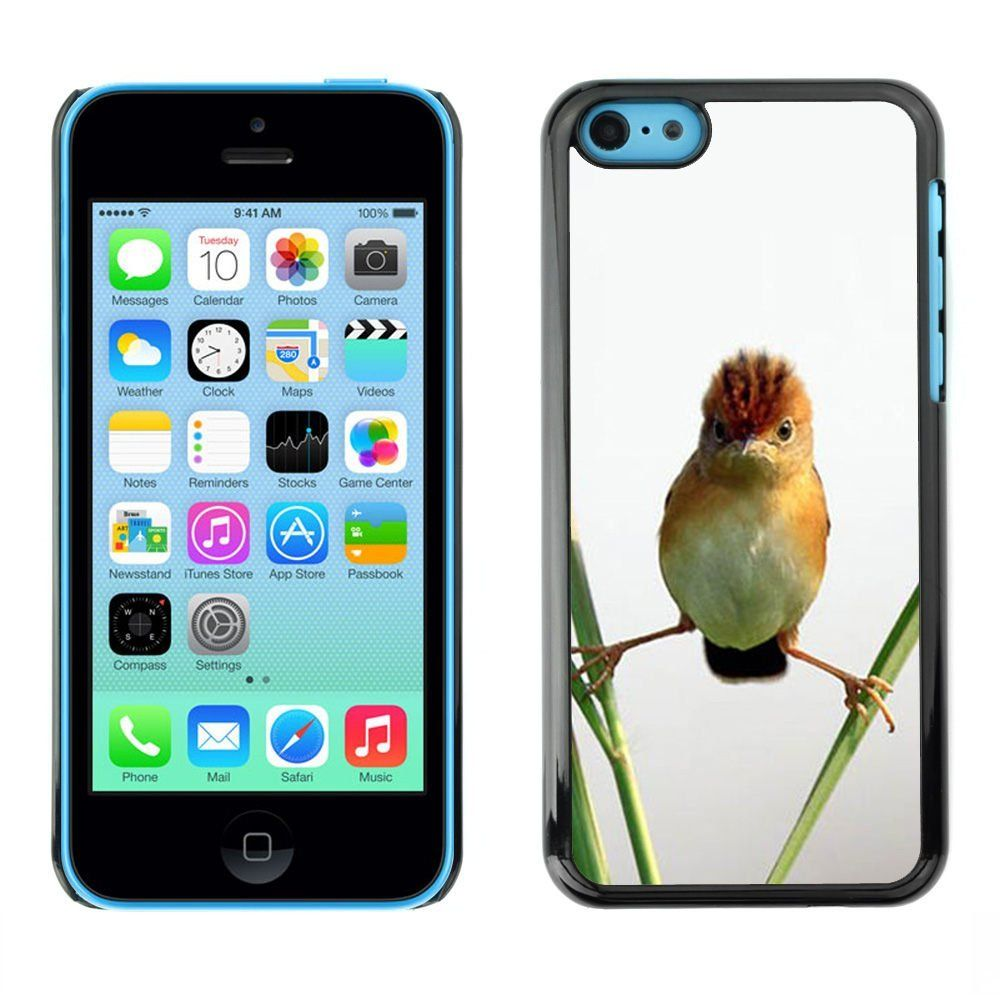 AmazonSmile: Exotic-Star ( Angry Bird Nature Standing Straw ) Snap On Hard Protective Case For Apple iPhone 5C: Cell Phones & Accessories