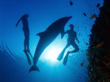 Bucear con delfines -