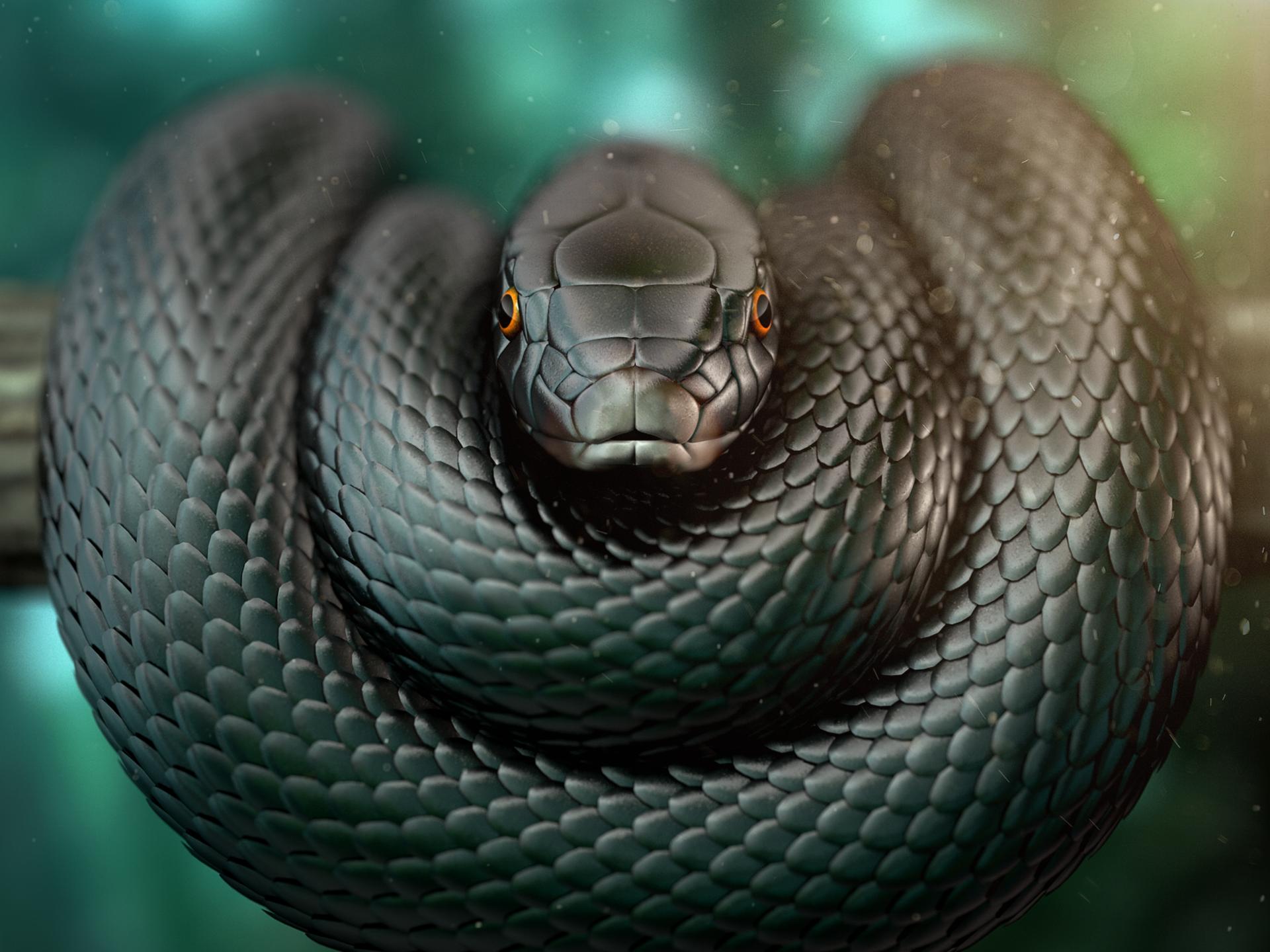 Imagen de la Serpiente Black Mamba