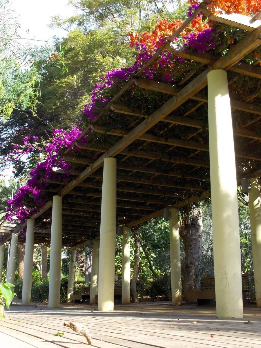 Bougainvillea Pergola Pergola covered Pergola, Covered