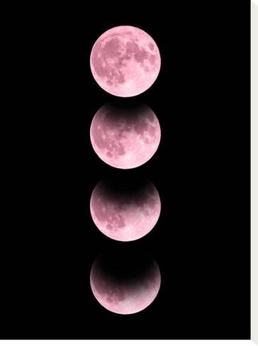 Pink Moon Stretched Canvas Print By Emanuela Carratoni