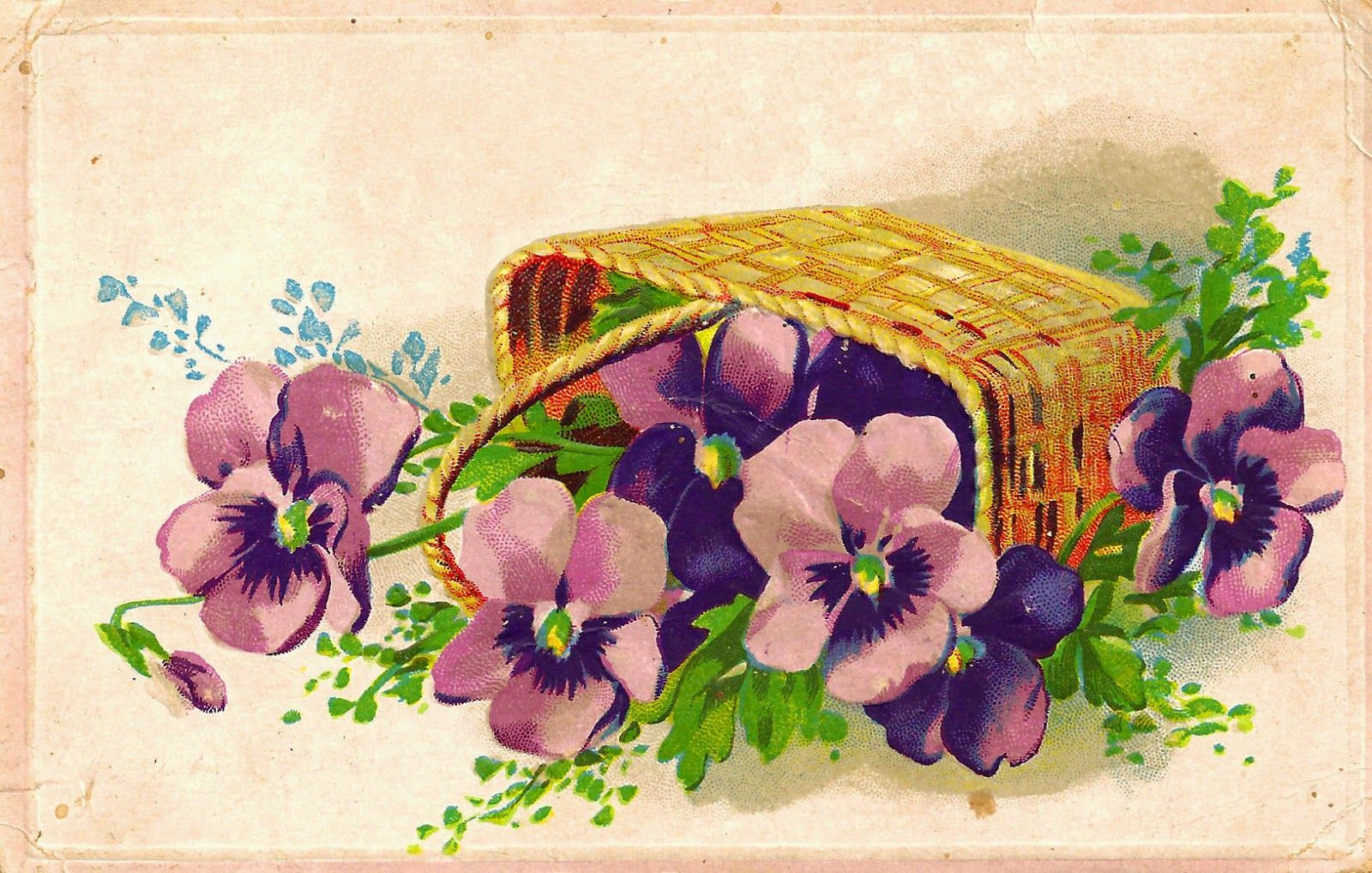 Antique Images: pansies