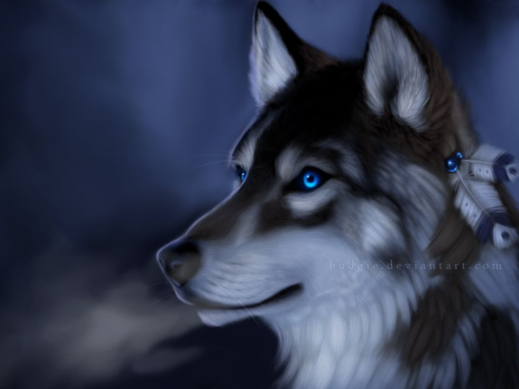 Wolf Blue Eyes Wallpaper 1024x768 R Wallpapers Wolf With Blue Eyes Types Of Wolves Wolf Dog