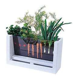 Window Garden!  Awesome idea for kids too.
