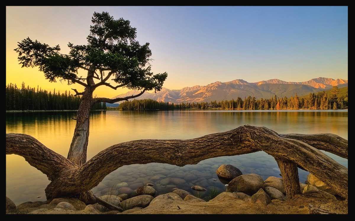Gambar Pemandangan Pohon Unik di Tepi Danau  Hd nature wallpapers