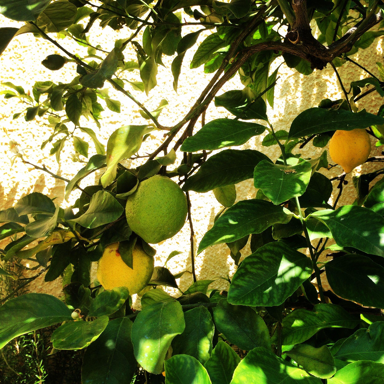 Limoni di Santa Marinella, Casa Toffoli