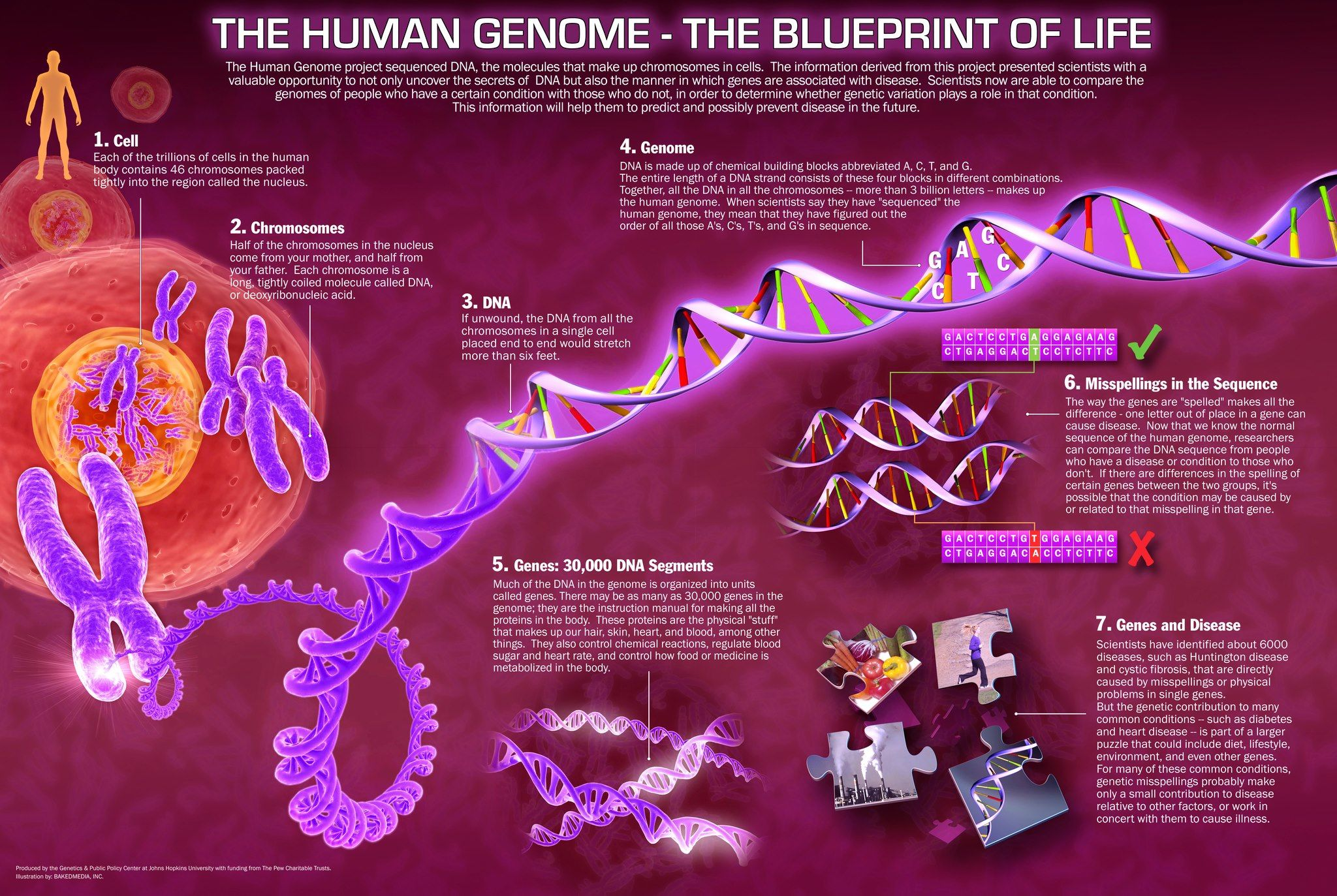 The blueprint of life from nucleotides sequence to condensed the blueprint of life from nucleotides sequence to condensed chromosomes malvernweather Choice Image