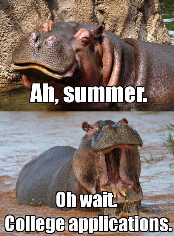 Summer Realization Cappex College Insider College Application College Application Funny College Memes