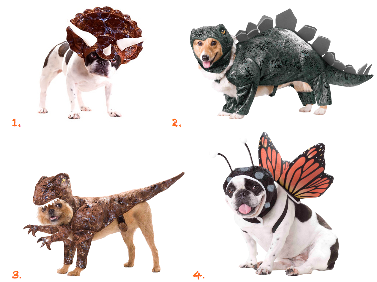 Animal Dinosaur and Insect Dog Costumes Dog