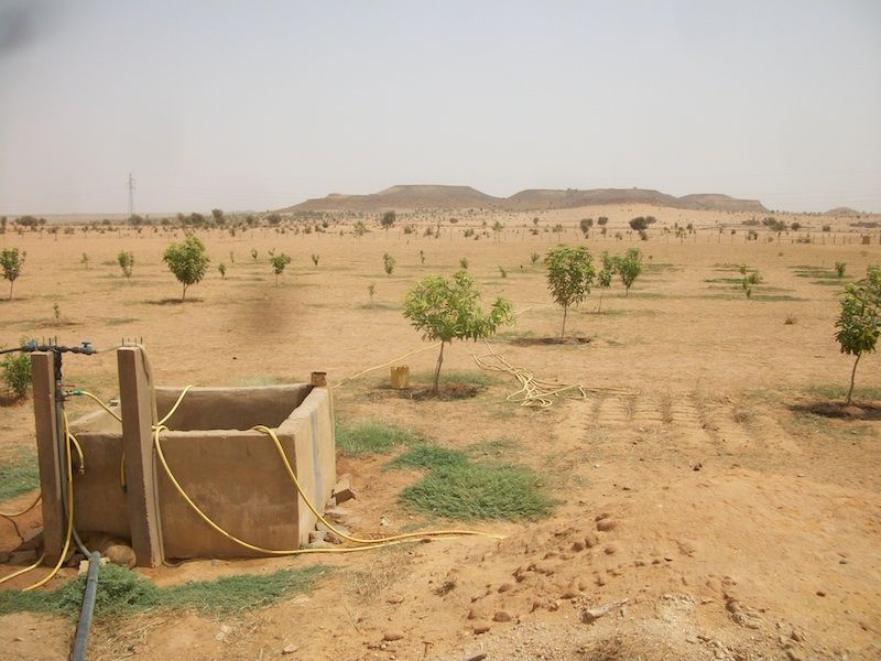 Neem Tree Orchard  Sahara Desert Mauritania Africa  About Neem  Neem Tree Orchard  Sahara Desert Mauritania Africa