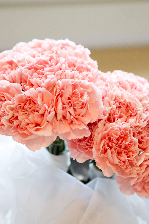Розовые гвоздики фото под носом